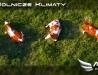 AeroArt - Rolnicze klimaty - krówki na łące