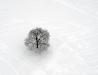 Zimowe klimaty - drzewo w szczerym polu