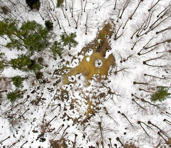 Leśne mokradła