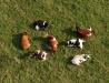 Krówki pełne mleka