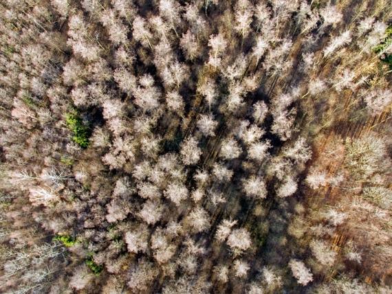 Widok ortogonalny lasu - miejscowość Nisko