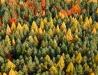 Lasy Janowskie z lotu ptaka - jesień