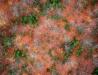 Dywan z liści. Uleszczyzna nad rzeką Tanwią.