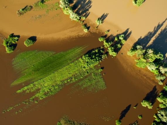 Wody Sanu (te jaśniejsze u góry) spotykają się z wodami Trzebośnicy (ciemniejsze u dołu)