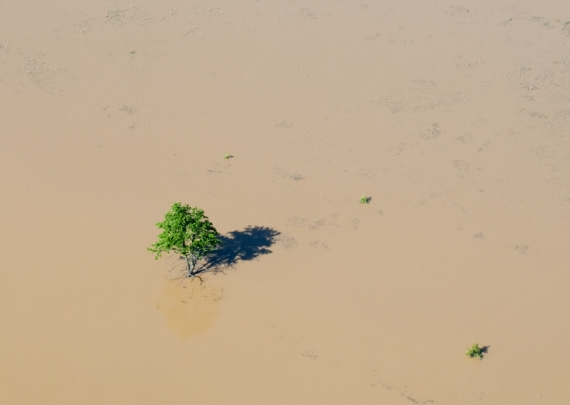 Samotne drzewko