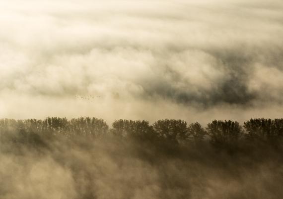 Jesienna migracja ptaków