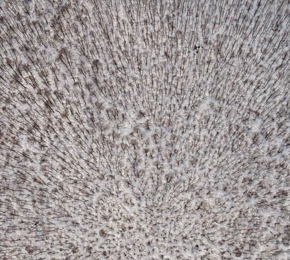 Bagienny las przysypany śniegiem (widok z lotu ptaka)