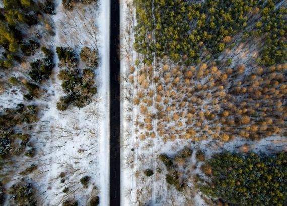 Droga przez Puszczę Sandomierską (zima)