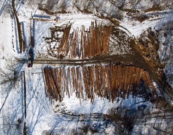 Paluszki solone rozsypane na śniegu? .. w rzeczystości skład drewna