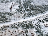 Leśna droga przez młodnik (zimowe uroki Puszczy Sandomierskiej)